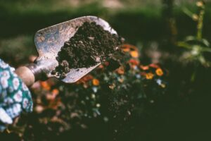 Umwelttipps für den eigenen Garten